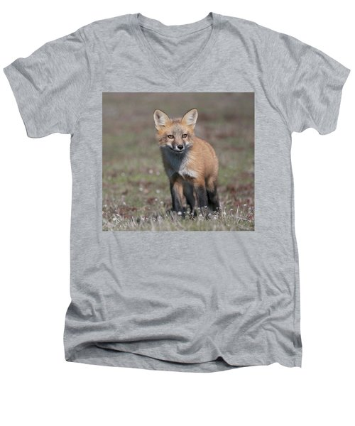 Fox Kit Men's V-Neck T-Shirt