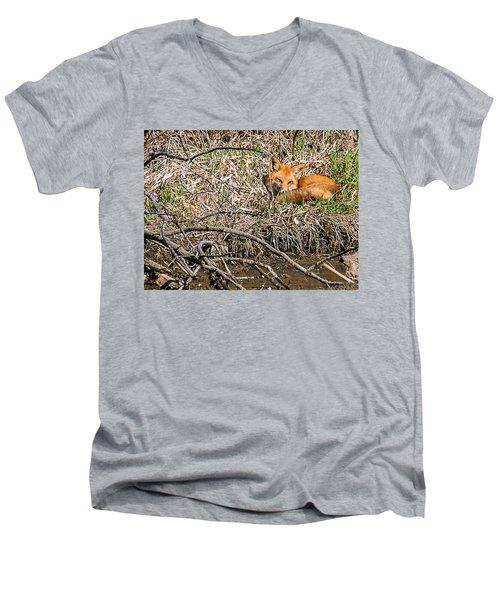 Fox Napping Men's V-Neck T-Shirt