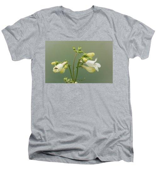 Foxglove Beardtongue Men's V-Neck T-Shirt