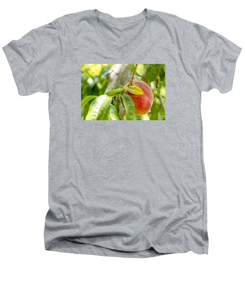 Fresh Peach Hanging In Orchard Men's V-Neck T-Shirt