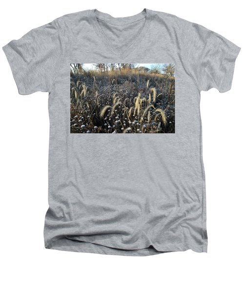 Frosted Foxtail Grasses In Glacial Park Men's V-Neck T-Shirt
