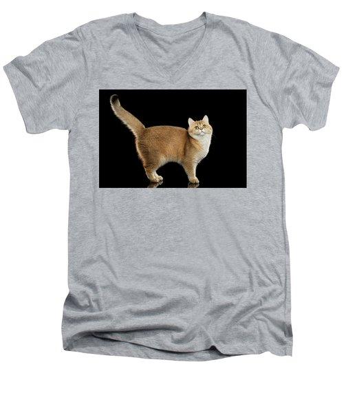 Funny British Cat Golden Color Of Fur Men's V-Neck T-Shirt