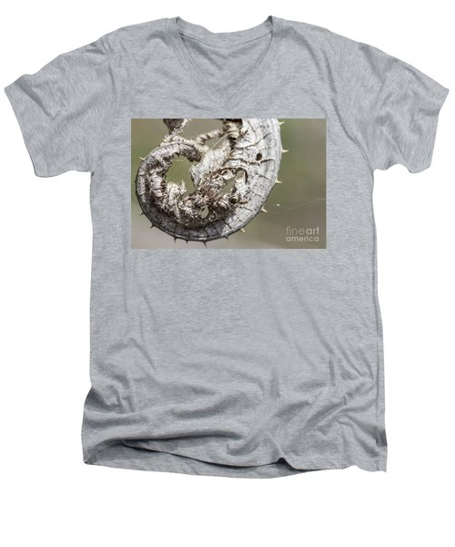 Men's V-Neck T-Shirt featuring the photograph Furrow Orb Weaver On A Dry Thisle Leaf by Jivko Nakev