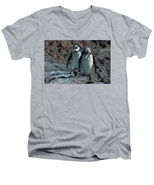 Galapagos Penguins  Bartelome Island Galapagos Islands Men's V-Neck T-Shirt