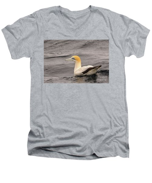 Gannet 5 Men's V-Neck T-Shirt