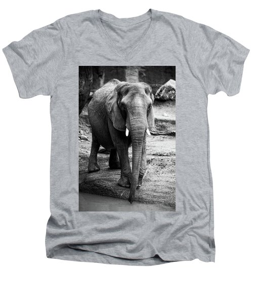Men's V-Neck T-Shirt featuring the photograph Gentle One by Karol Livote