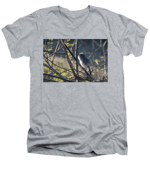 Gnatcatcher Men's V-Neck T-Shirt