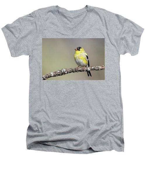 Gold Finch Men's V-Neck T-Shirt