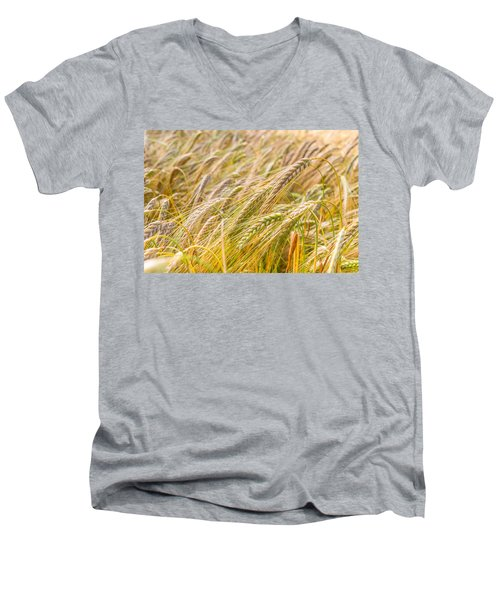 Golden Barley. Men's V-Neck T-Shirt