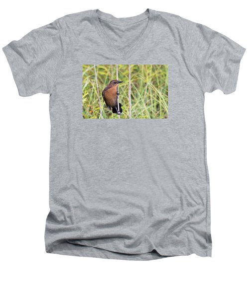 Grackle In The Reeds Men's V-Neck T-Shirt