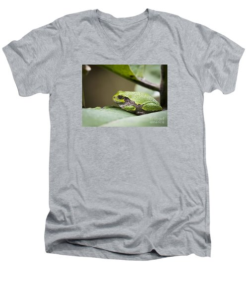 Men's V-Neck T-Shirt featuring the photograph Gray Tree Frog - North American Tree Frog by Ricky L Jones
