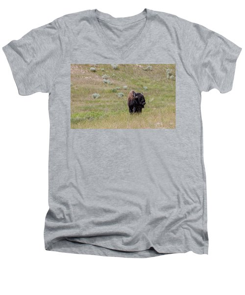 Men's V-Neck T-Shirt featuring the photograph Grazing Bison by Fran Riley