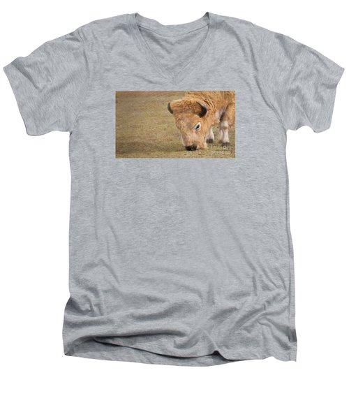 Grazing Buffalo Men's V-Neck T-Shirt