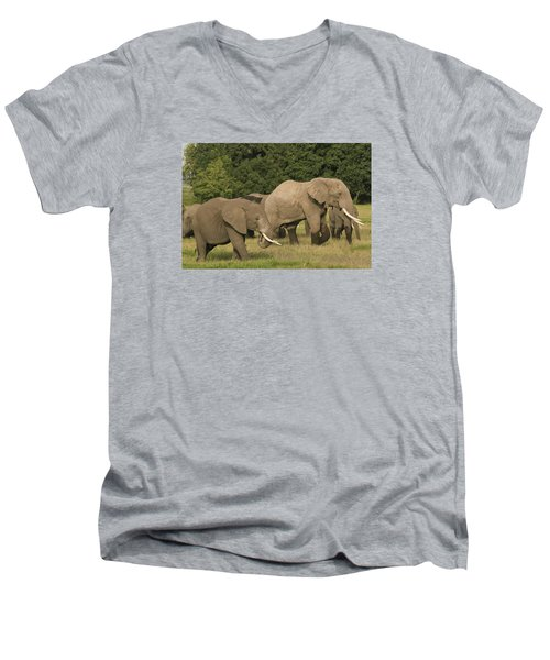 Men's V-Neck T-Shirt featuring the photograph Grazing Elephants by Gary Hall