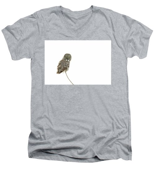 Men's V-Neck T-Shirt featuring the photograph Great Grey Owl On White by Mircea Costina Photography
