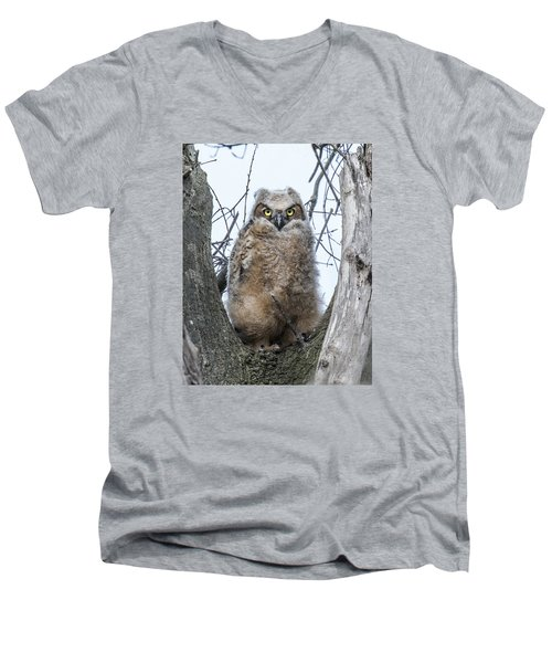 Great Horned Owl Portrait Men's V-Neck T-Shirt