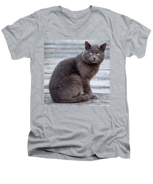 Men's V-Neck T-Shirt featuring the photograph Green Eye Stare Cat Square by Terry DeLuco