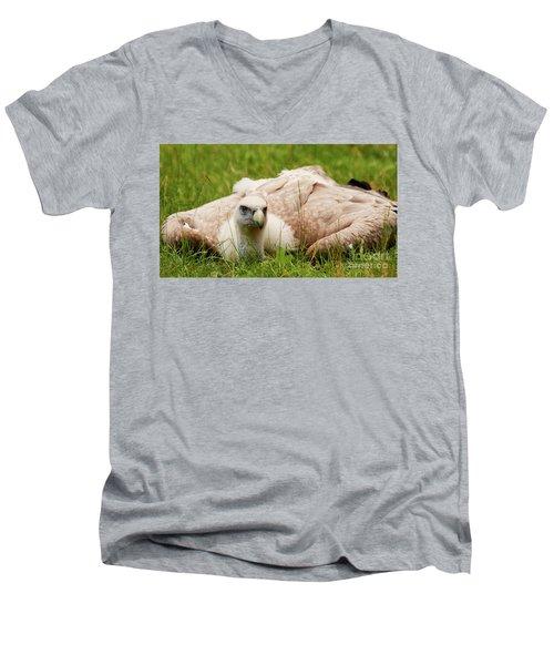 Griffon Vulture Men's V-Neck T-Shirt