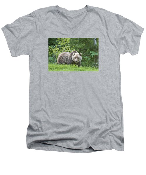 Grizzly Bear Men's V-Neck T-Shirt by Gary Lengyel