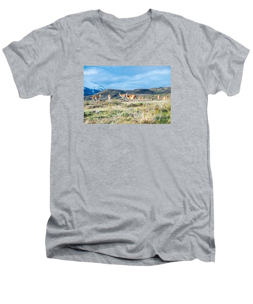 Guanaco In Patagonia Men's V-Neck T-Shirt