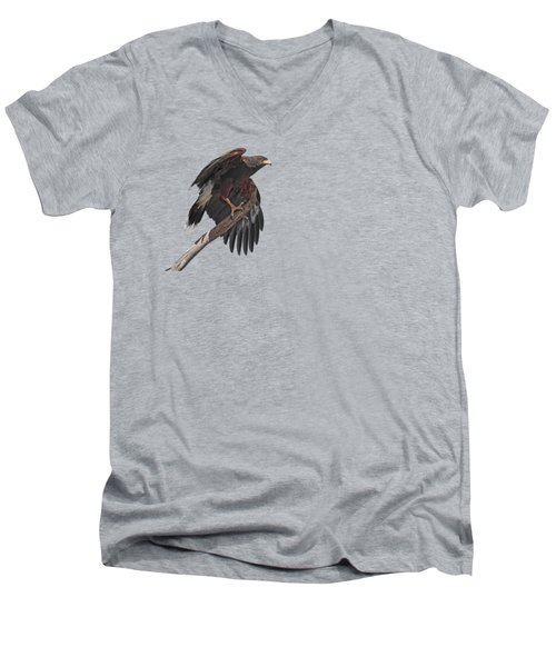 Harris Hawk - Transparent 2 Men's V-Neck T-Shirt by Nikolyn McDonald