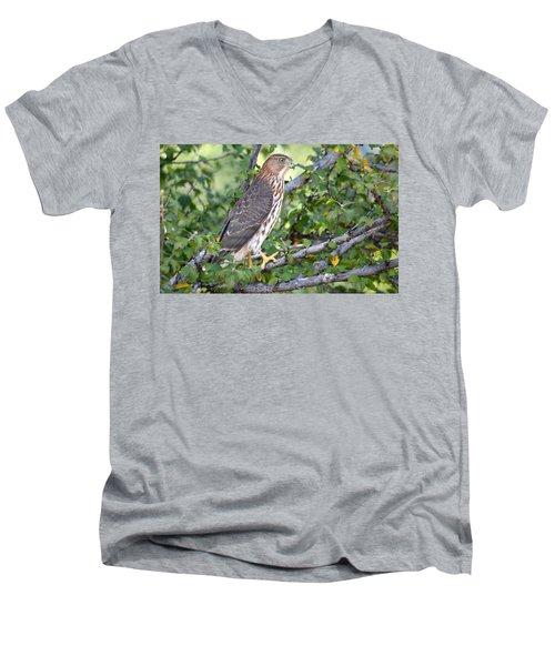 Men's V-Neck T-Shirt featuring the photograph Hawk  by AJ Schibig