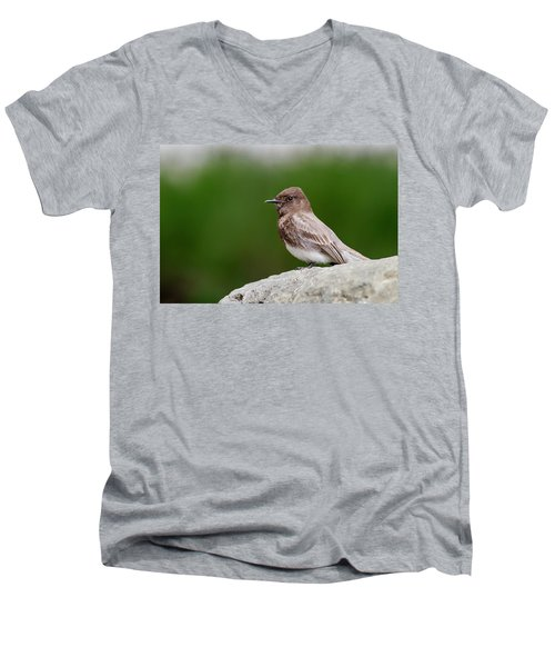 Black Phoebe Men's V-Neck T-Shirt