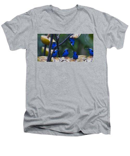 Honeycreeper Men's V-Neck T-Shirt by Betsy Knapp