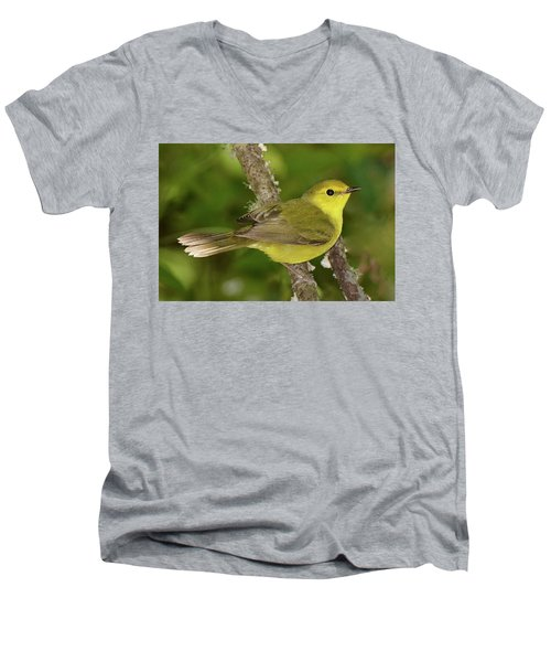 Hooded Warbler Female Men's V-Neck T-Shirt by Alan Lenk