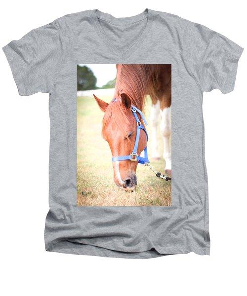 Horse Eating In A Pasture In Vibrant Color Men's V-Neck T-Shirt