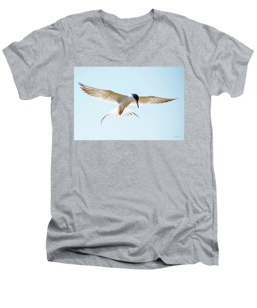 Hovering Tern Men's V-Neck T-Shirt