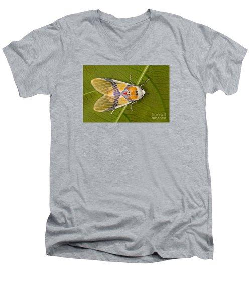 Idalus Carinosa Moth Men's V-Neck T-Shirt