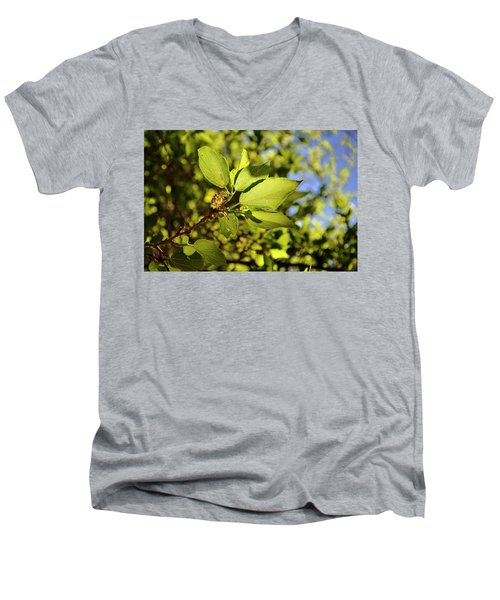 Illuminated Leaves Men's V-Neck T-Shirt