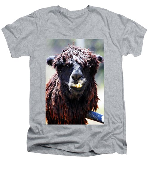 Men's V-Neck T-Shirt featuring the photograph Is Your Mama A Llama? by Anthony Jones