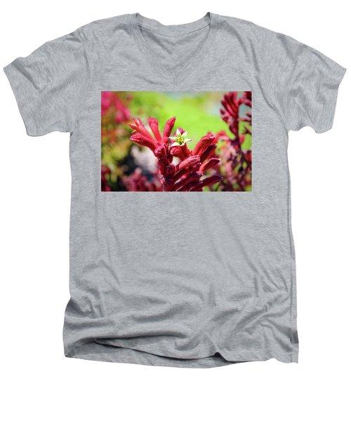Kangaroo Paws Men's V-Neck T-Shirt