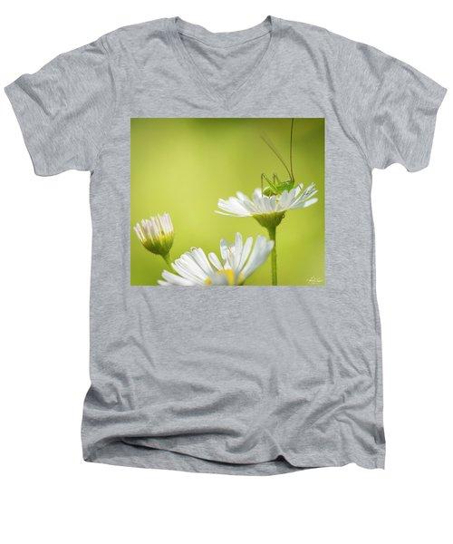 Katydid Men's V-Neck T-Shirt