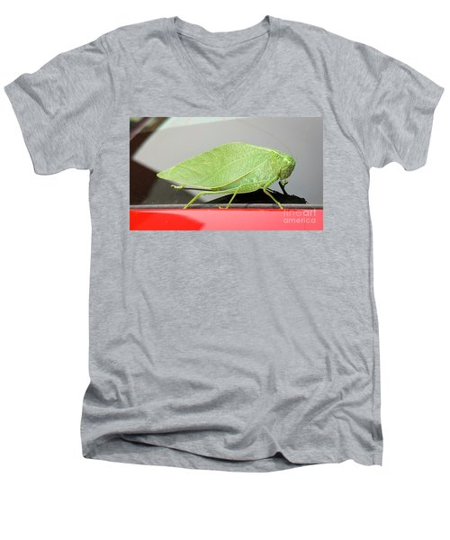 Katydids- Bush Crickets Men's V-Neck T-Shirt