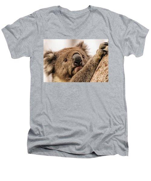 Koala 3 Men's V-Neck T-Shirt by Werner Padarin
