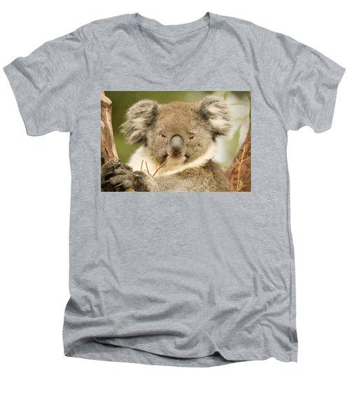 Koala Snack Men's V-Neck T-Shirt by Mike  Dawson