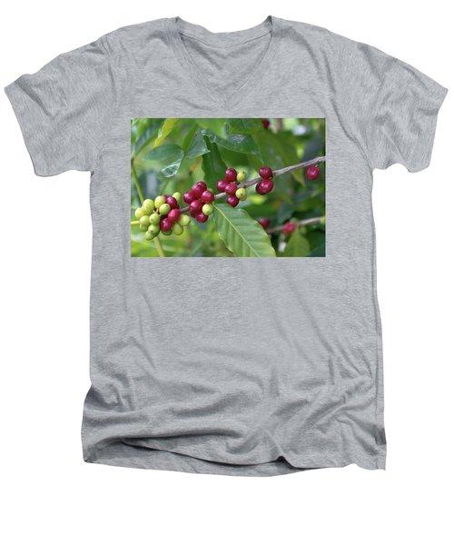 Kona Coffee Cherries Men's V-Neck T-Shirt
