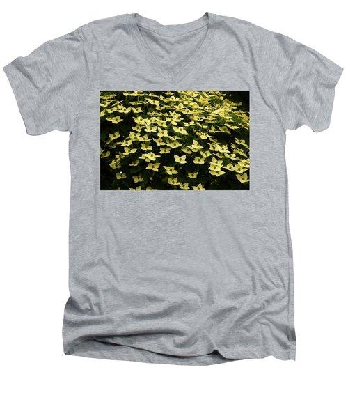 Kousa Dogwood Blooms Men's V-Neck T-Shirt