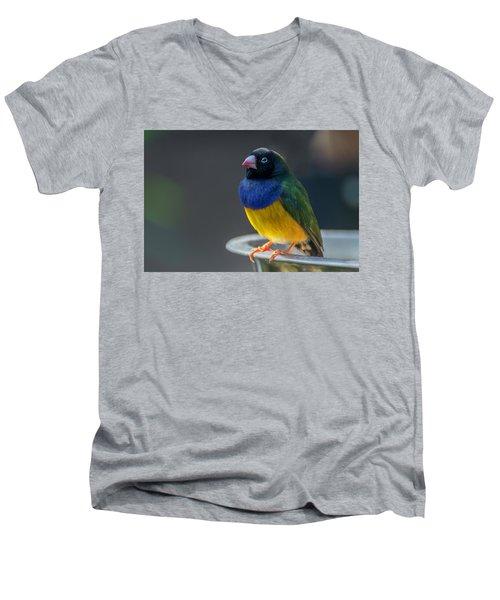 Lady Gouldian Finch Men's V-Neck T-Shirt
