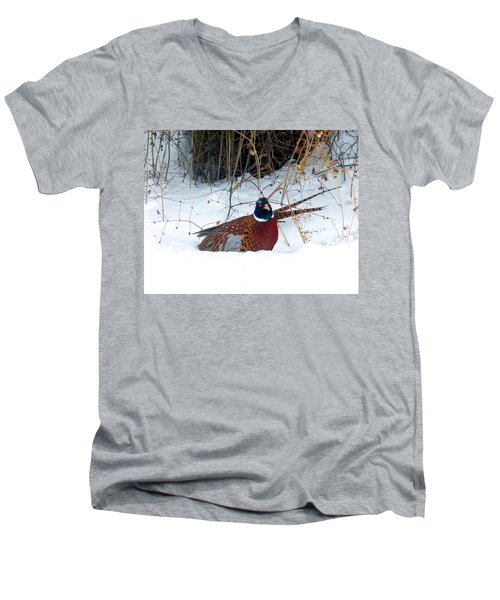 Men's V-Neck T-Shirt featuring the photograph Lake Country Pheasant 2 by Will Borden