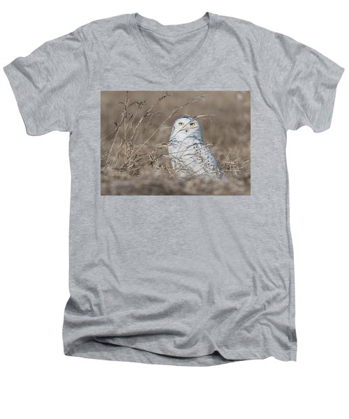 Last Year Of The Snowy Owls... Men's V-Neck T-Shirt