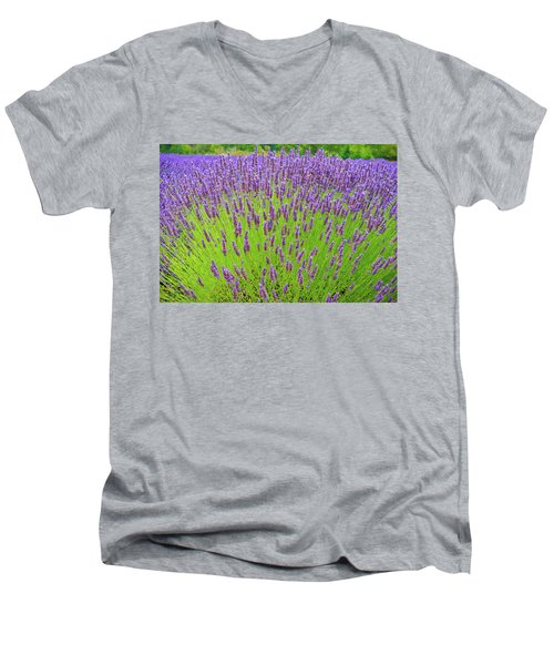 Lavender Gathering Men's V-Neck T-Shirt by Ken Stanback