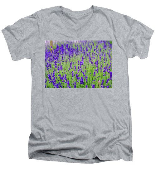 Lavender Men's V-Neck T-Shirt by Rainer Kersten