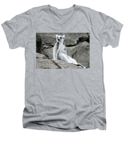 Lemur The Cutie Men's V-Neck T-Shirt