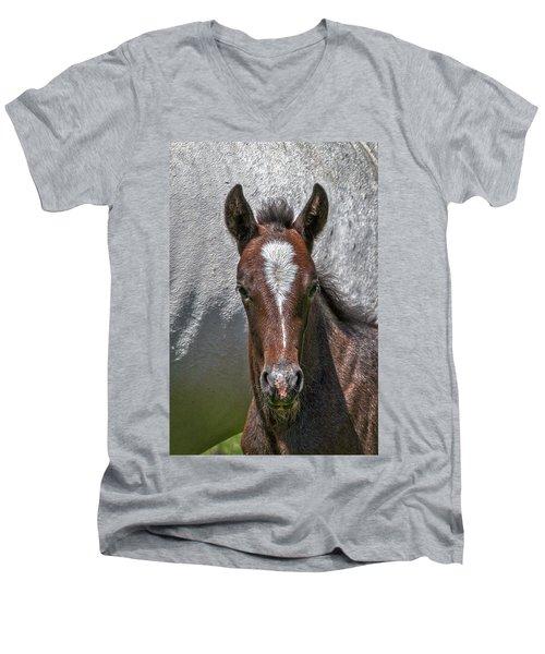 Men's V-Neck T-Shirt featuring the photograph Lipizzan Horses #2 by Stuart Litoff