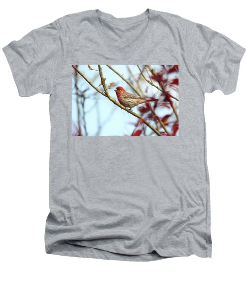 Little Finch Men's V-Neck T-Shirt