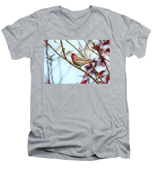 Little Finch Men's V-Neck T-Shirt